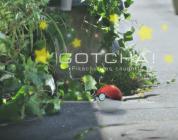 Novità su Pokémon GO in arrivo a metà ottobre!