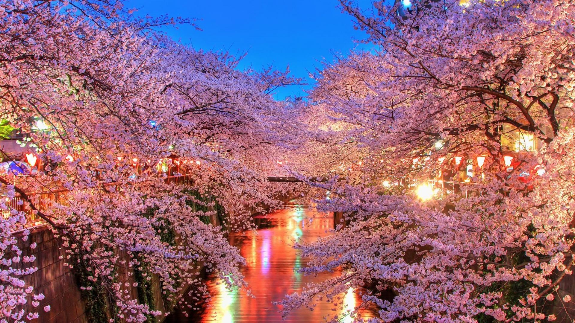 hanami-night tour in Giappone