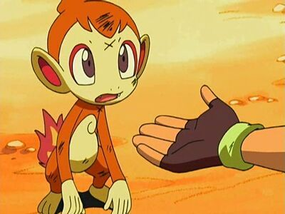 chimchar ash