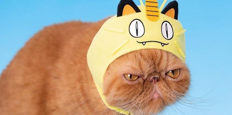 Fa il suo debutto un nuovo set di cappelli Pokémon, ma sono per gatti