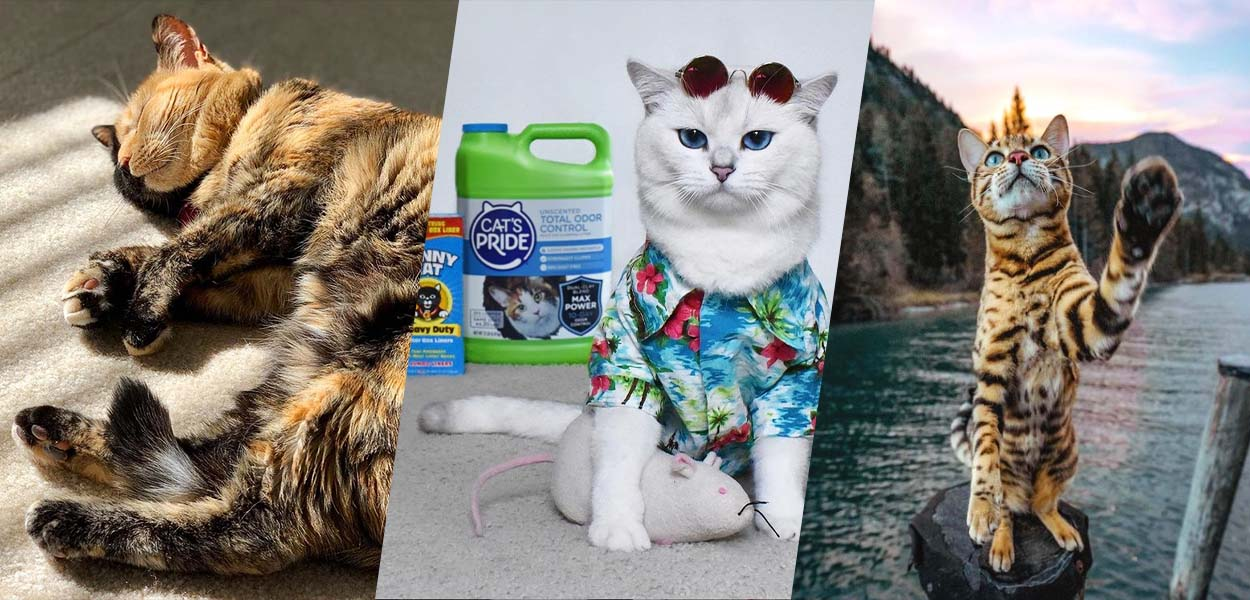 I 10 gatti da seguire assolutamente su Instagram